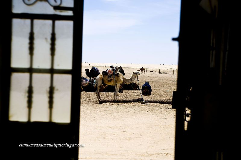 que hacer en tunez desierto de tozeur_foto_miguel angel munoz romero_003