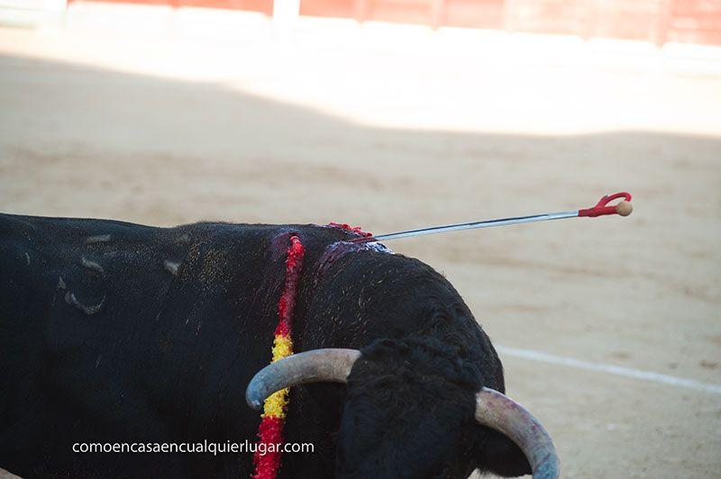 El festival taurino más antiguo de españa chinchon_Foto_Miguel Angel Munoz Romero_0014