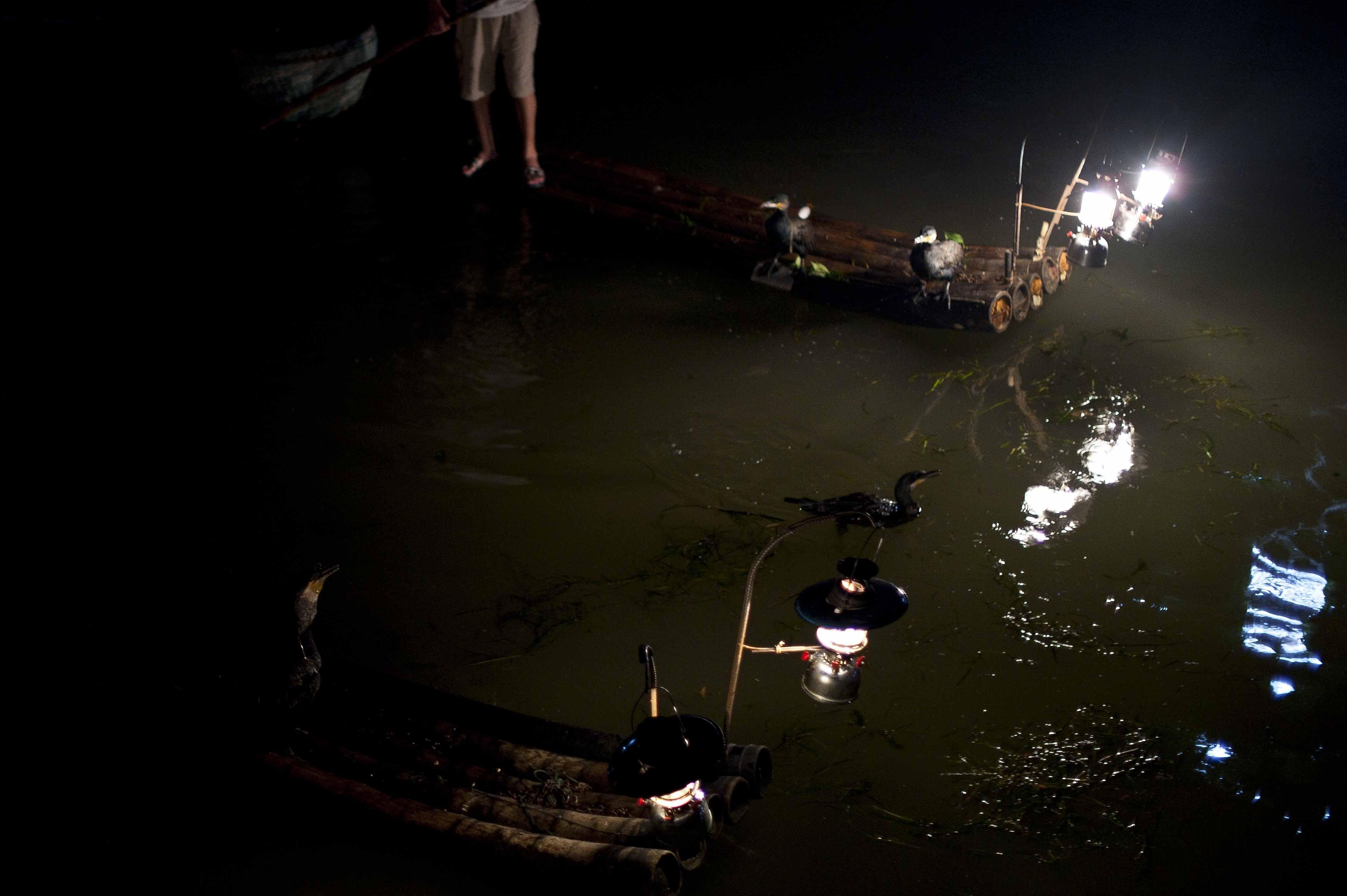 Pesca con cormoránes, pesca nocturna, Guilin, China