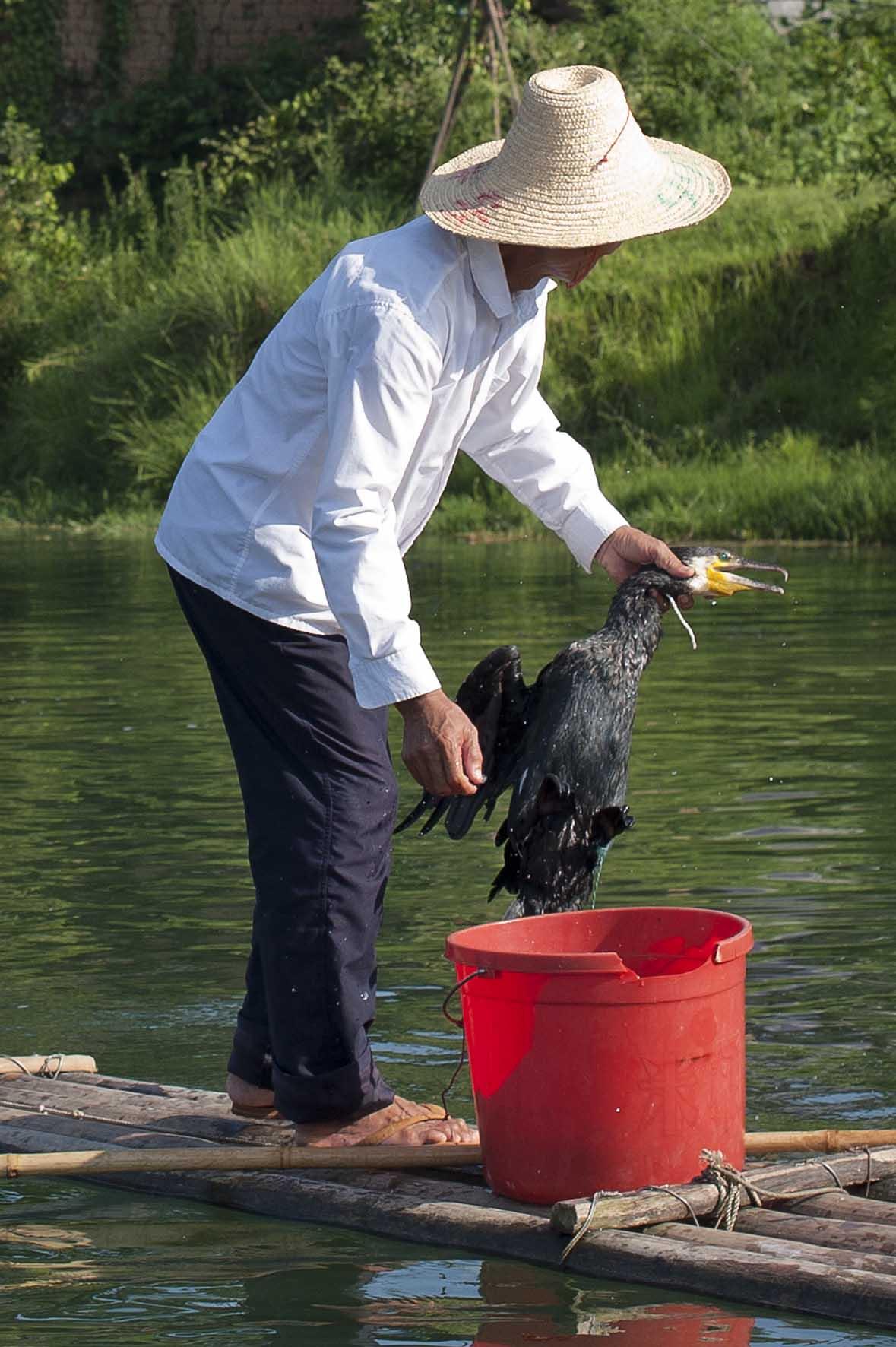 Pesca con cormoránes, Yangshuo, China