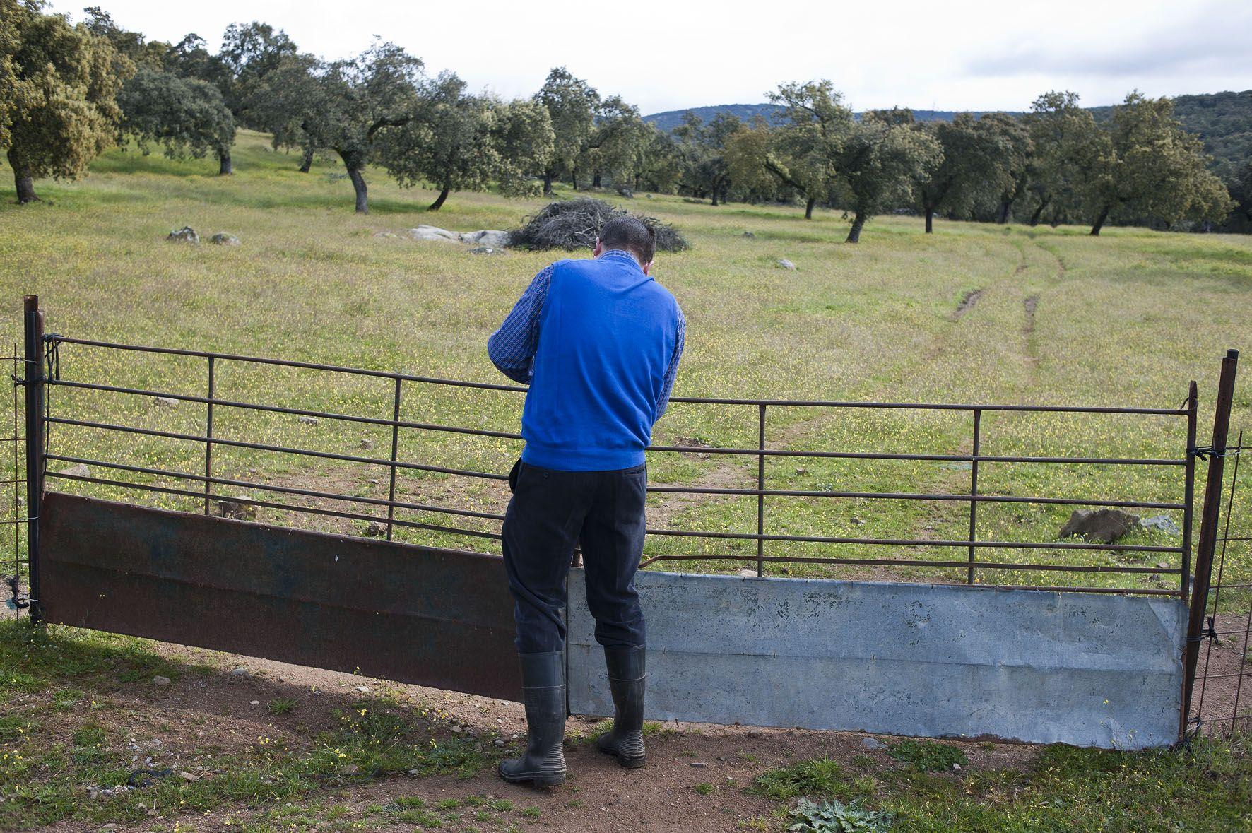 Las puertas de la dehesa Ruta del jamón ibérico dehesa de Extremadura